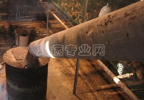 如何用废油桶改造成育雏加温设备?|养鸡技术论坛区