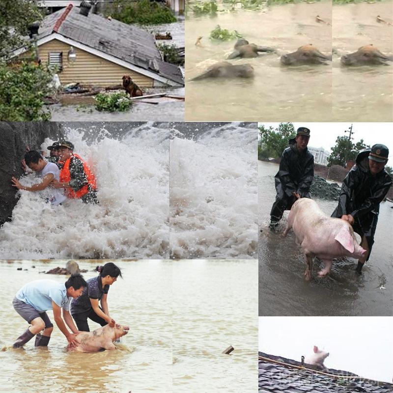 农业部加强部署防汛抗洪和灾后动物防疫工作