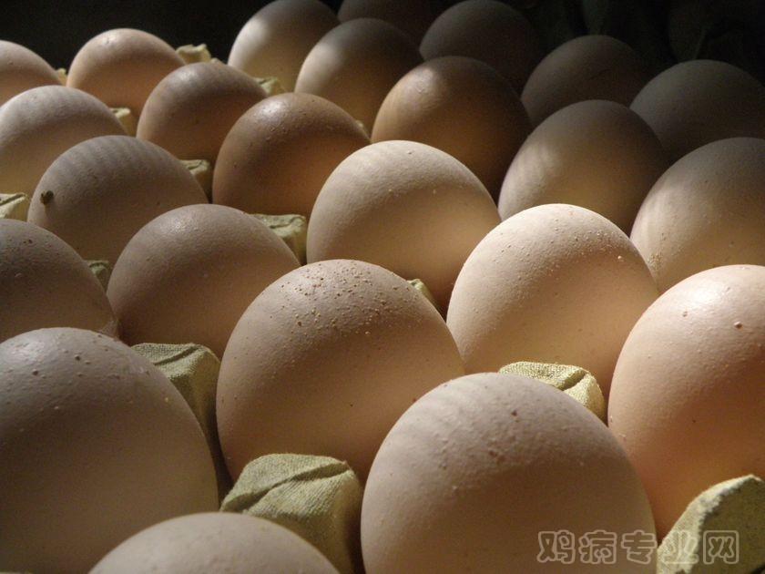 老龄鸡蛋壳粗糙