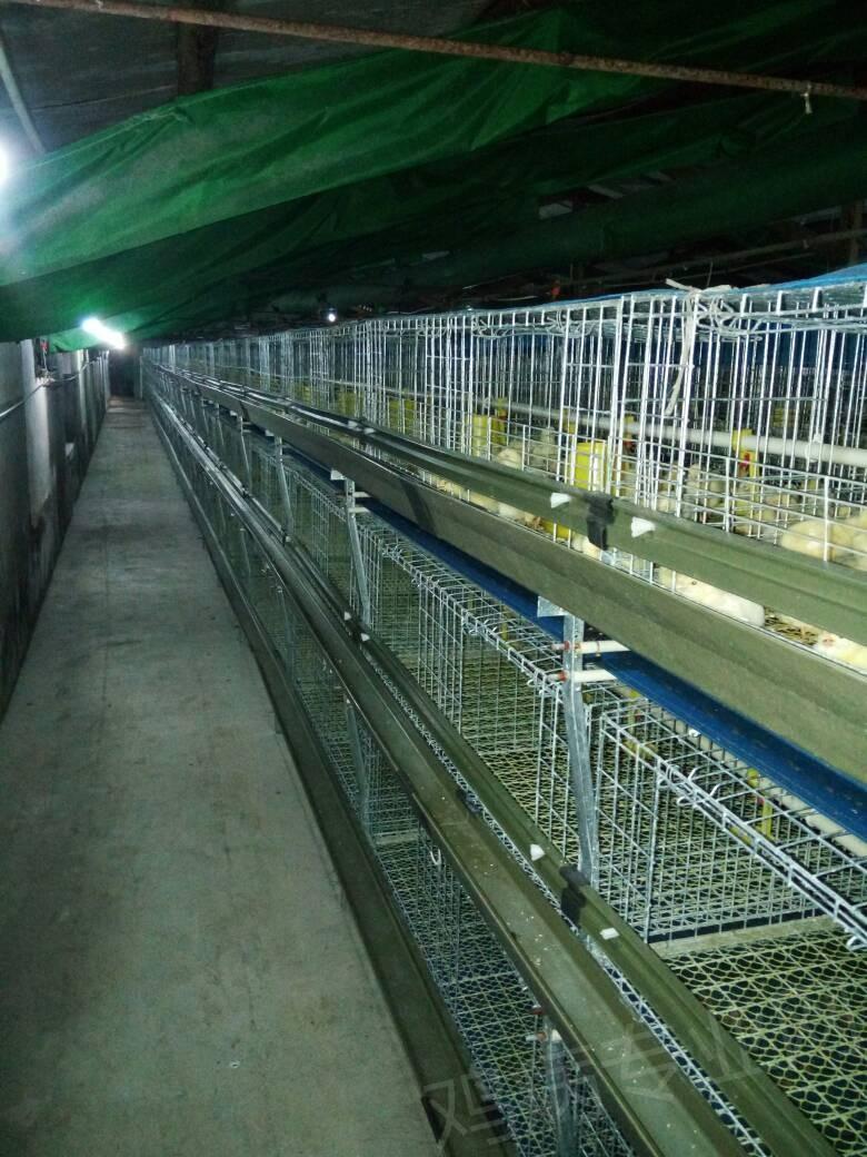 笼养817 ,鸡舍设计问题 养鸡设备 鸡舍建设