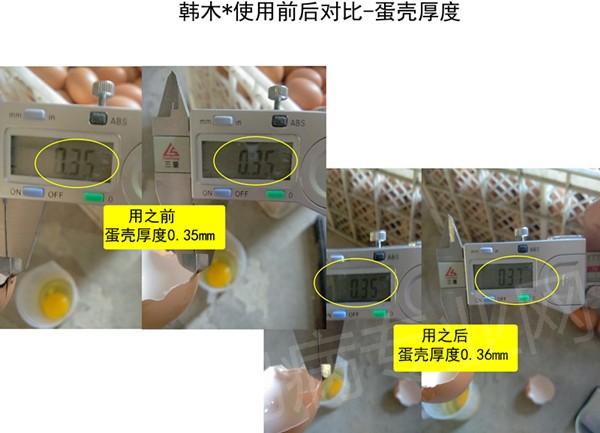 韩木村肽能使用前后对比-蛋壳厚度.jpg
