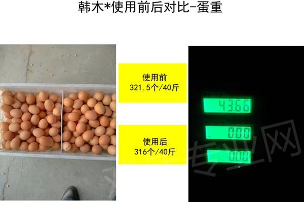 韩木村肽能使用前后对比-蛋重.jpg