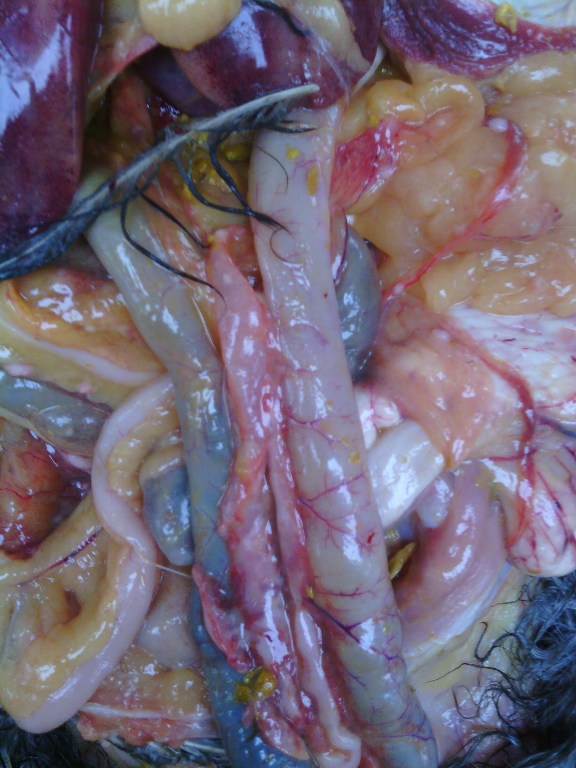 胰腺形态结构部分思维导构图